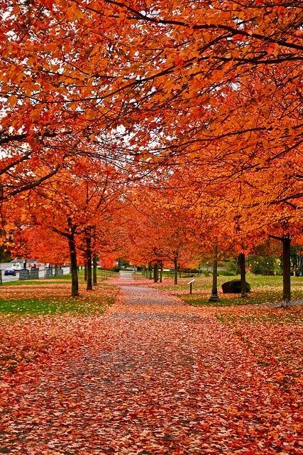Viajes insólitos para hacer en otoño