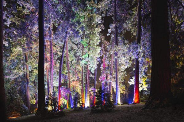 Espectáculo de luces en el Real Jardín Botánico de Madrid