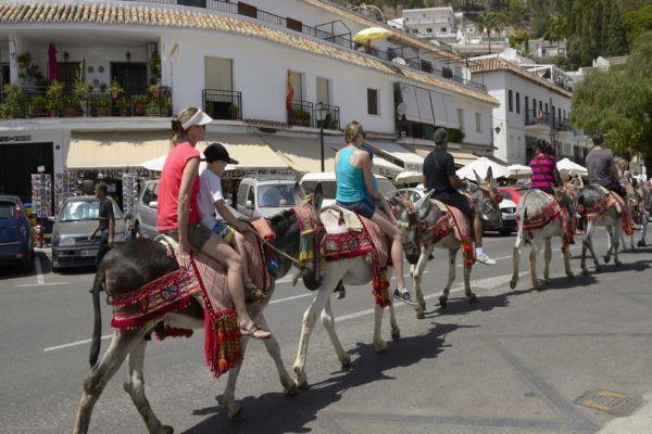 Los burros de Mijas, en uno de sus servicios.