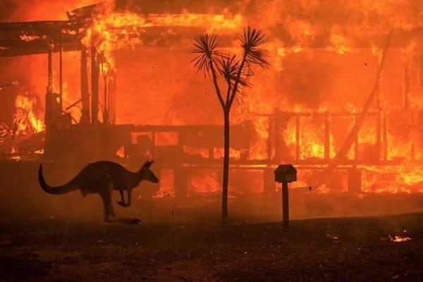 Un canguro intenta escapar de un incendio en Australia