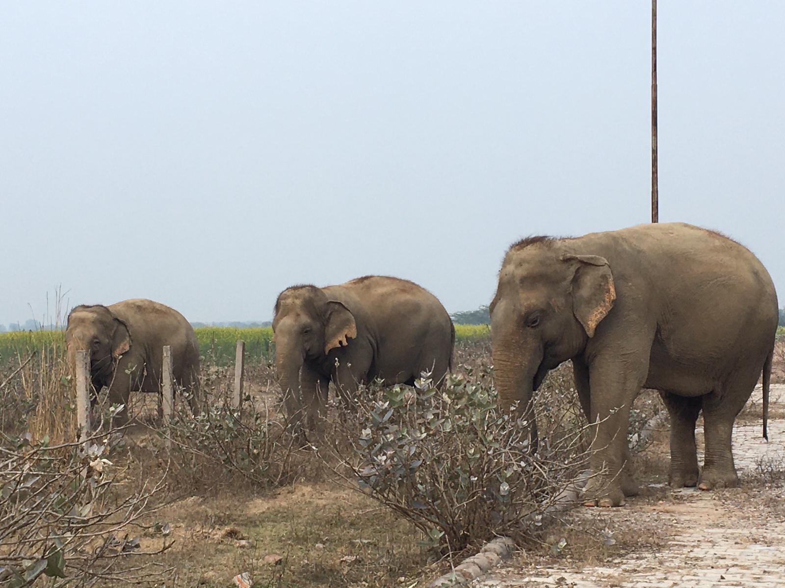 Mónica tuvo la oportunidad de ver elefantes